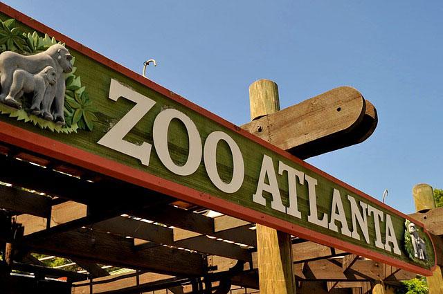 zoo-atlanta-georgia